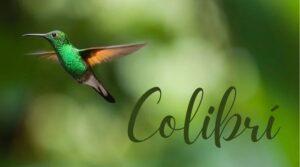 Palabra gatillo de hooponopono colibri