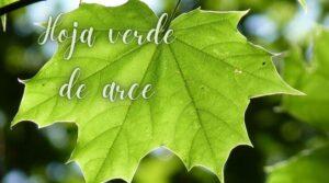 hoja verde de arce hoponopono
