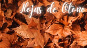 hoponopono hojas de otoño