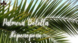 Qué significa Palmera Botella en Hoponopono